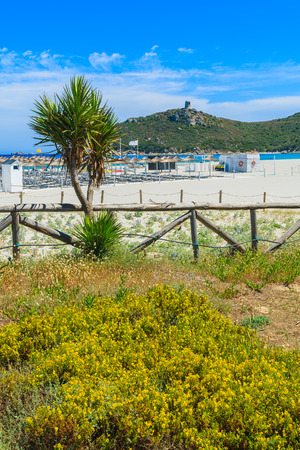 Palm trees and flowers on Porto Giunco beach, Sardinia island, Italy