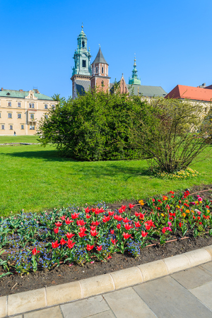 Red tulip flowers in gardens of Royal Wawel castle on sunny spring day, Krakow, Poland