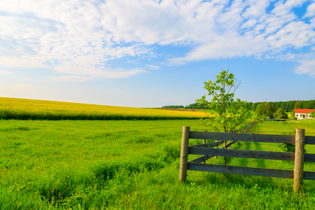 Wooden pasture fence on green farming field with yellow rapeseed flower field in background, Burgenland, southern Austria
