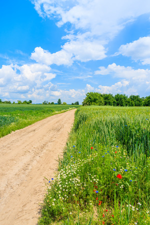 Scenic rural road and green fields in summer landscape, Poland