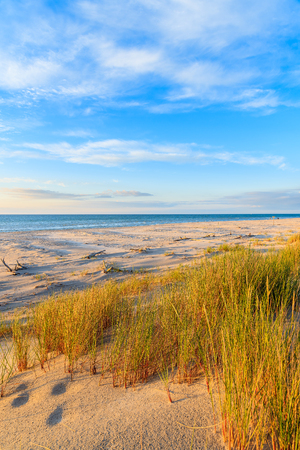 Grass on sand dunes at sunset time on a beach in Leba, Baltic Sea, Poland Stock fotó - 92853214