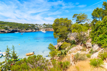 Green pine treeson cliff rocks overlooking beautiful Cala Portinatx bay with azure sea water, Ibiza island, Spain