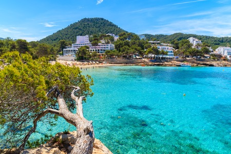 Green pine tree on cliff rock overlooking beautiful Cala Portinatx bay with hotels on shore, Ibiza island, Spain Stock Photo