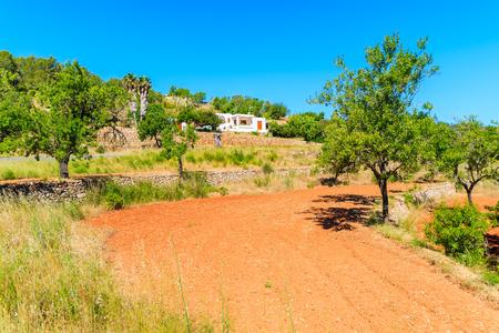 Olijfbomen in boomgaard in het noordelijke deel van het eiland Ibiza, Spanje Stockfoto