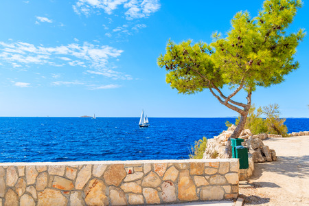 Sailing boat on blue sea with stone wall of costal promenade with green pine tree in foreground, Primosten town, Dalmatia, Croatia