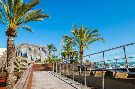 Palm trees on promenade in Alcudia town on Majorca island.