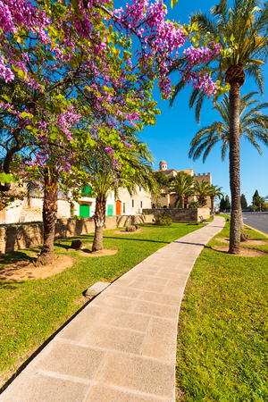 Alley in a park at spring season with blooming purple tree flowers, Alcudia, Majorca island
