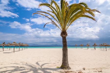 Palm tree sand beach sun shade umbrella sea view white clouds blue sky, Alcudia, Majorca island, Spain Stock Photo