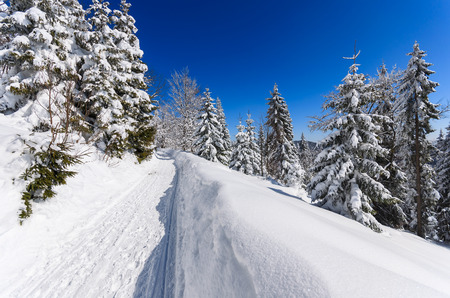 Path in snow in winter landscape of Gorce Mountains, Poland
