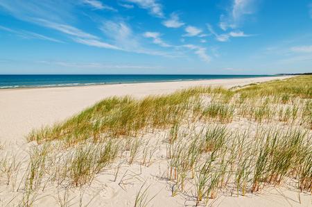 Grass on dunes on beautiful Baltic Sea beach near Leba, Poland