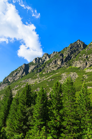 Mountains view green spruce trees, trail to 5 lakes valley (Piat Spisskich Ples), High Tatras, Slovakia Stock Photo