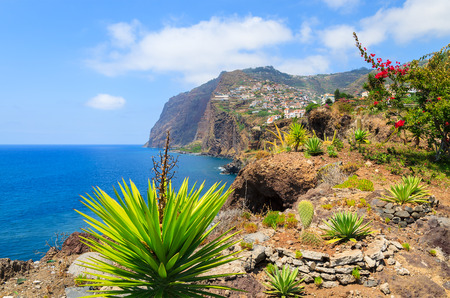 Tropical plants on coast of Madeira island in summer, Portugal Imagens