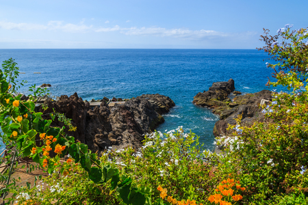 Tropical plants on coast of Madeira island in Funchal town