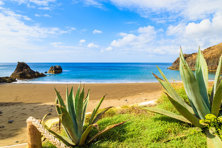View of beautiful Prainha beach with tropical plants in foreground near Canical town, Madeira island, Portugal