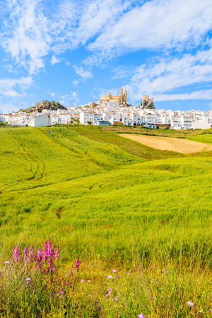 Olvera village with white houses and green fields in foreground in spring season, Andalusia, Spain
