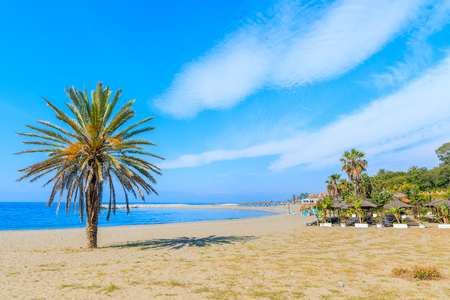 Palm tree on beautiful beach near Marbella town, Andalusia, Spain