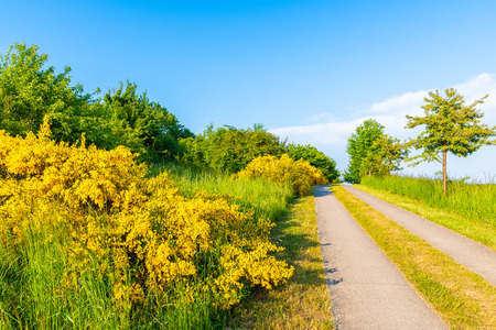 Cycling lane in green fields on Rugen island in spring season, Baltic Sea, Germany