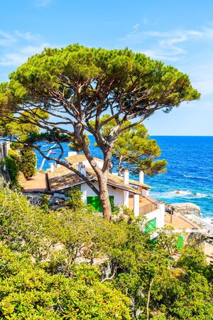 Green pine trees and typical house on coastal path near Llafranc village, Costa Brava, Spain