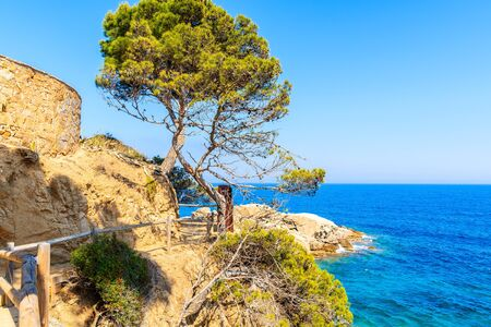Green pine tree on coastal path along blue sea near Cap Roig, Costa Brava, Spain