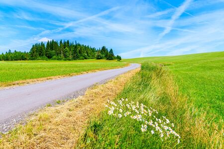 Summer flowers along cycling road around Tatra Mountains and green fields on summer day with beautiful blue sky, Poland Reklamní fotografie