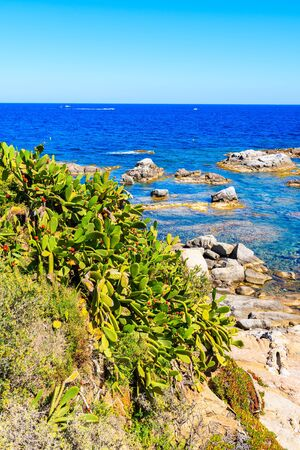 Green cacti plants on sea coast near Calella de Palafrugell town, Costa Brava, Spain
