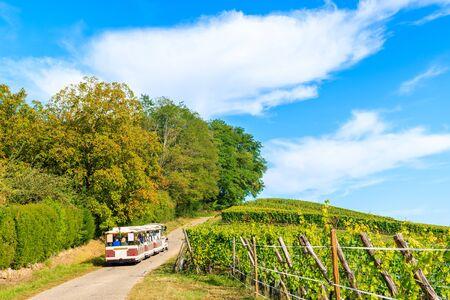 Tourist train among vineyards on Alsatian Wine Route near Riquewihr village, France 版權商用圖片 - 130816006