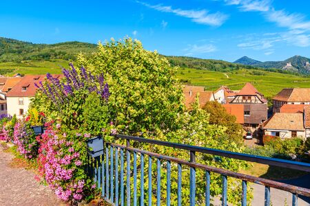 View of Hunawihr village from church terrace decorated with flowers, Alsace wine region, France
