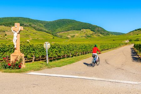 Young woman cycling among vineyards on road near Kientzheim village on Alsatian Wine Route, France