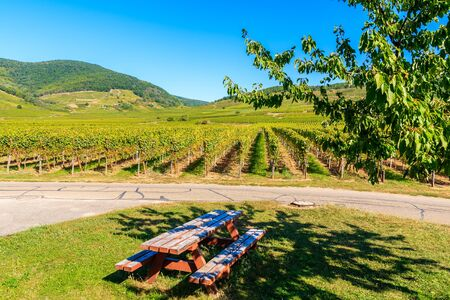 Picnic table under tree shade among vineyards on road near Kientzheim village on Alsatian Wine Route, France