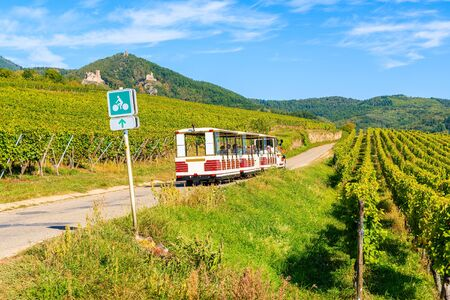 Tourist train among vineyards on Alsatian Wine Route near Riquewihr village, France 版權商用圖片 - 130816120