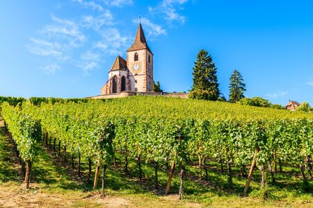 View of old church in vineyards of Hunawihr village, Alsace wine region, France