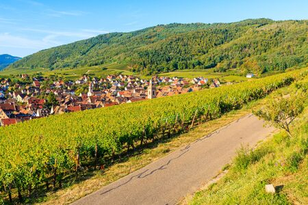 Road among vineyards above Riquewihr village on Alsatian Wine Route, France