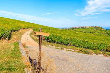 Sign with cycling path names in vineyards on Alsatian Wine Route near Riquewihr village, France Standard-Bild - 130816140