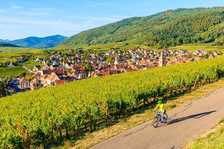 Young woman cycling among vineyards on road above Riquewihr village on Alsatian Wine Route, France