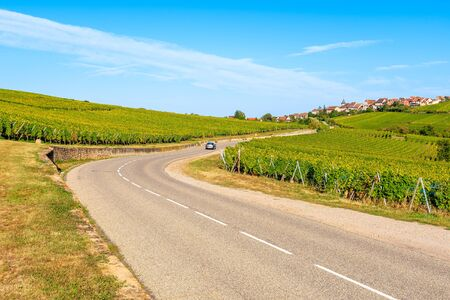 Road among vineyards on Alsatian Wine Route near Riquewihr village, France Reklamní fotografie