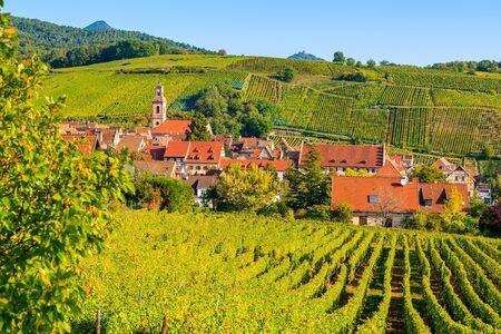 Blick auf die Weinberge im Dorf Riquewihr, Elsässer Weinstraße, Frankreich Standard-Bild