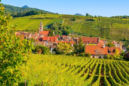 View of vineyards in Riquewihr village, Alsace Wine Route, France