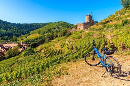 Bicycle among vineyards and view of Kaysersberg castle, Alsace Wine Route, France