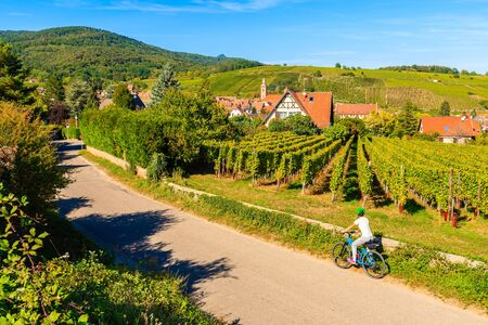 Young woman cyclist on road along vineyards near Riquewihr village, Alsace Wine Route, France