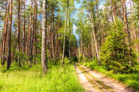 Forest cycling road near lake Nidzkie in Puszcza Piska, Mazury Lake District, Poland