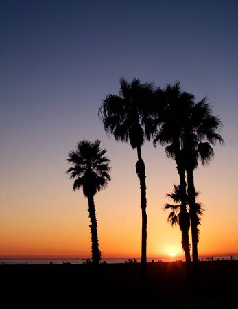 The sun sets over the Pacific Ocean with palm trees in Santa Monica, California Stock Photo - 13139273