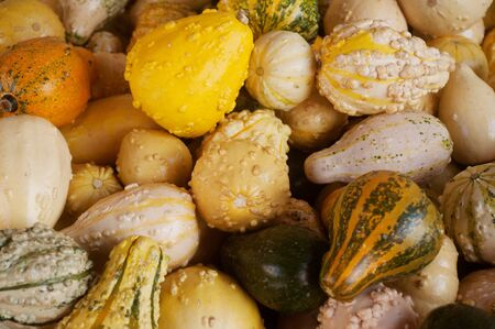 closeup of a group of harvested pumpkins  Stock Photo - 15817307