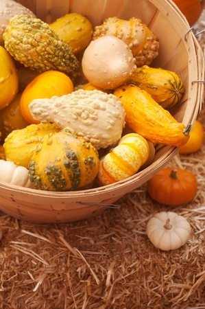 closeup of a group of harvested pumpkins  photo
