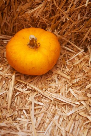 closeup of a group of harvested pumpkins  Stock Photo - 15817315