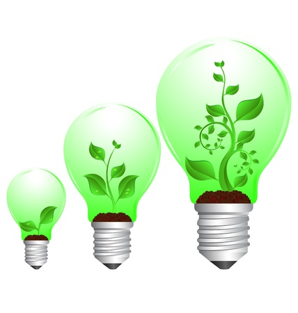 three green plant in bulb growth cycle on white background Vector