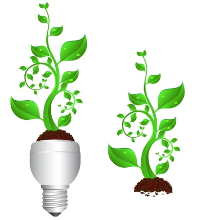 tungsten: Tungsten light bulb with plant inside  Illustration
