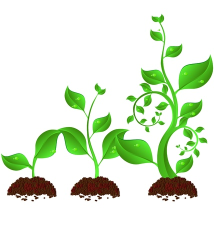 three green plant growth cycle on white background
