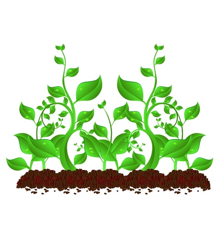 seedling growing: illustration of plant sapling growing on abstract background  Illustration