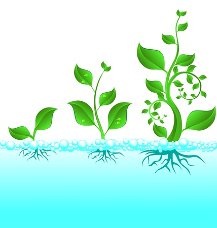 germinating: three green plant in water growth cycle on white background Illustration