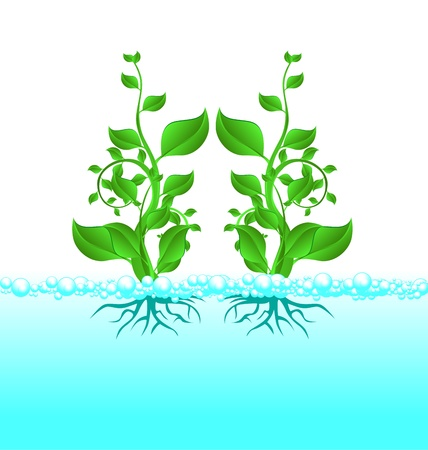 Stock Photo: The little green sprout of a tree in the blue water splashing. Symbol of Nature  Vector